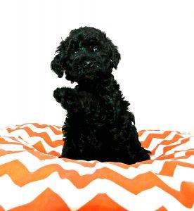 dog training puppy training socialization classes
