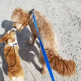 dog training, puppy training, dog trainer near me, dog and puppy classes, socialization classes, group classes, puppy problems