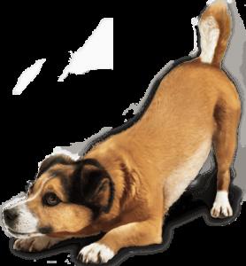 puppy training, dog training, utah dog training, santaquin, payson, spanish fork, american fork, orem, elk ridge, salem, benjamin,