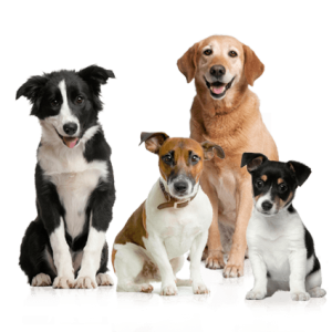 dog training, dog trainer, trained puppies, obedience training, puppy training, board and train, santaquin, utah, payson, spanish fork, goshen, eureka, salem, elk ridge, group classes