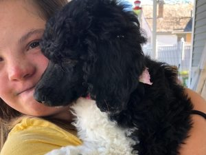 puppy, trained puppy, puppy training, obedience training, board and train, poodle, standard poodle, spoodle, spoo, parti, for sale, puppies for sale, trained puppies for sale, dog training, rehome, adoption, rescue, breeder, near me, utah, santaquin, payson, mona, juab, nephi, county, spanish fork