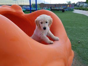 dog training, dog trainer, trained puppies, obedience training, puppy training, board and train, santaquin, utah, payson, spanish fork, goshen, eureka, salem, elk ridge