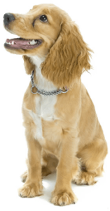 dog trainer near me, dog training, dog trainer, trained puppies, obedience training, puppy training, board and train, santaquin, utah, payson, spanish fork, goshen, eureka, salem, elk ridge