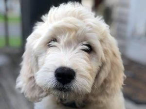 ou bring home a puppy from Happy Tails Obedience Training, you are bringing home a life-long companion.