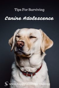 Tips for Surviving Canine Adolescence | www.happytailsdogs.training