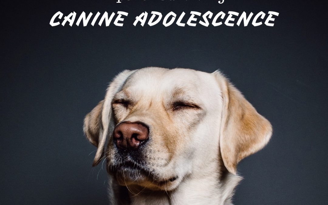Adolescence in Dogs