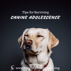 Tips for Surviving Canine Adolescence