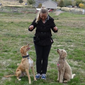 Day train session with dogs and puppies