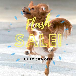 dog training, puppy training, dog training sale, happy dog, utah dog training, private training, personalized training, dog training sale
