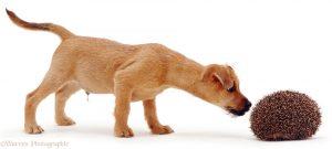 puppy, yellow puppy, mix breed puppy, curious puppy, dog training, puppy training, santaquin utah, utah dog trainer