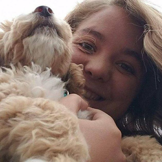 dog trainer, holding goldendoodle puppy, tuxedo goldendoodle, red and white goldendoodle, dog and puppy training, puppy board and train